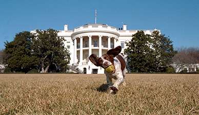 Dog Running on White House Lawn